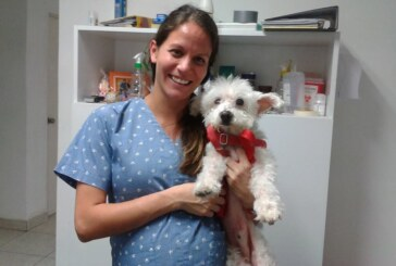 Safepet Veterinaria